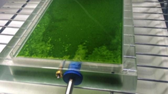 use_of_microalgae_to_treat_wastewaters.jpg
